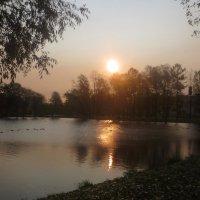 Восход над парком Победы :: Елена