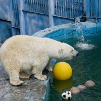 Белый медведь :: Алексей Екимовских