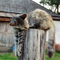 Коты на столбике 4 :: Светлана Рябова-Шатунова