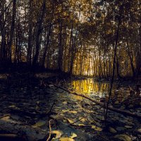 В лесу :: Андрей Кузнецов