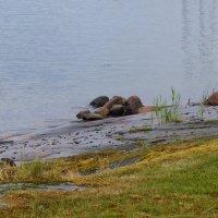 Espoo coast (2) :: Wirkki Millson