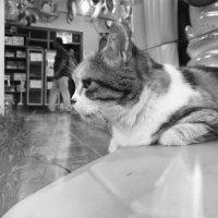Кошка :: Frame35327