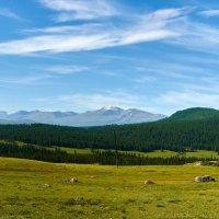 Солнце,небо и леса наши верные друзья. :: Николай Мальцев