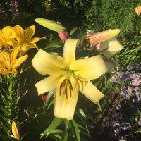 Желтая красавица :: minchanka