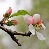 Начало весны :: Светлана