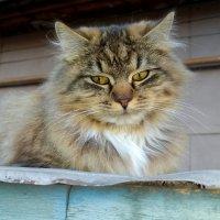 кошачья серея 5 :: Александр Прокудин