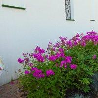 Яркие краски лета. :: Любовь
