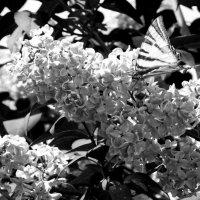"""Конкурс от Фотонаблюдателя """"ЦВЕТ или ЧБ"""" - Природа :: Наталья (ShadeNataly) Мельник"""