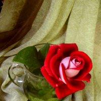 Одинокая роза. :: Nata
