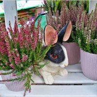 В цветочном магазине. :: Валерия Комова