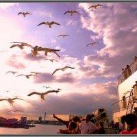 Паром встречают чайки :: Raduzka (Надежда Веркина)