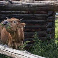 Руккола-мукола, даешь крапиву! :: Алиса Колмагорова