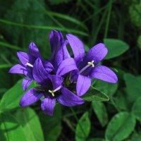 цветок IMG_2350 :: Олег Петрушин