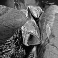 Морские хищники :: Ефим Журбин