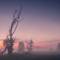 В холодном тумане :: Сергей Корнев