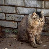 Кошки Балаклавы :: Ирина Фирсова