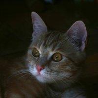 Кошачий портрет :: Евгений Пермяков