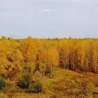 затеряться в осеннем лесу... :: nataly-teplyakov