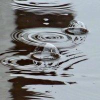 Пузыри дождя :: Светлана Рябова-Шатунова