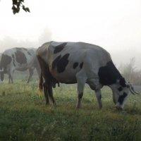 В утреннем тумане :: Светлана Рябова-Шатунова