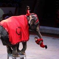 Цирк! :: Евгений Яхим