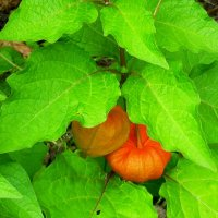 В листве горят фонарики :: Daria Vorons