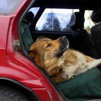 Собакен.. :: Галина Полина