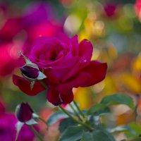 краски лета :: Александр Солуянов
