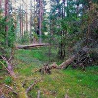 В Вологодском лесу... :: Sergey Gordoff