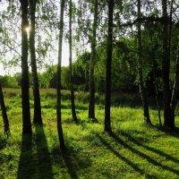 Солнце за работой :: Андрей Лукьянов