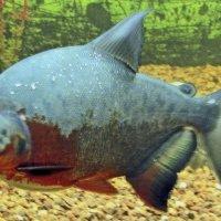 В аквариуме :: Nikolay Monahov