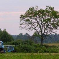Утро с трактором :: Александр