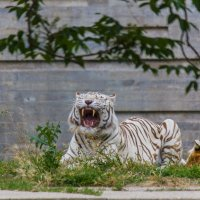 В зоопарке :: Andrey Odnolitok