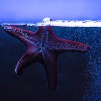 Морская звезда :: Надя Sh