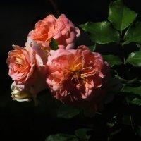 Осенние розы. :: Nata