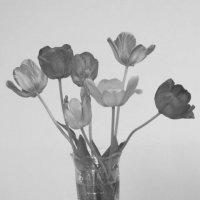 Букет тюльпанов :: Дмитрий Никитин