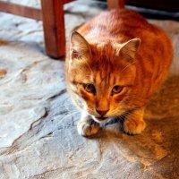 Кипрские коты :: Елена Даньшина