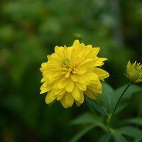 цветок :: Горный турист Иван Иванов
