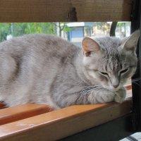 Кошечка-душечка :: Gen Vel
