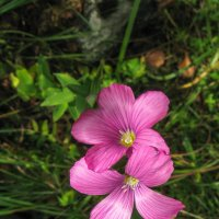 цветок IMG_8619 :: Олег Петрушин
