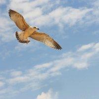 Чувство свободы в бескрайнем небе :: Swetlana V