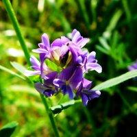 Цветок :: Анастасия Рысь