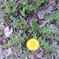 Полевые цветы 2 :: Алексей Кузнецов