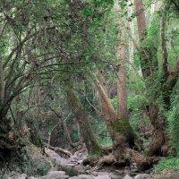 Зеленое сердце Кипра :: Мария Шатрова