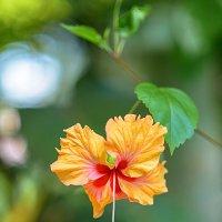 Orange flower :: Trage