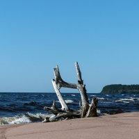 Дикий пляж :: VL