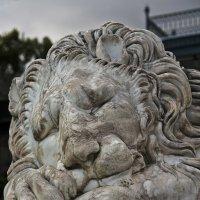 Спящий лев :: BD Колесников