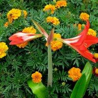 Цветы Мосара :: Александр Сапунов