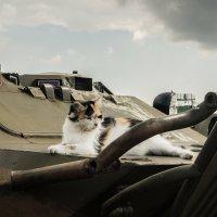 кошка :: Оксана Горбунова