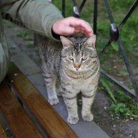 Котик из отеля :: ZNatasha -